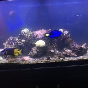 SW Reef