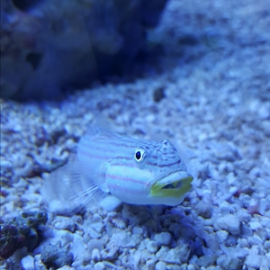 Goby3