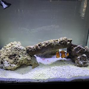 My tank Image