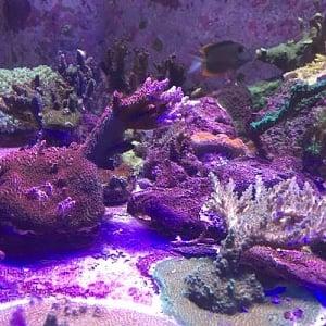 Reef Tank 1.20.2019