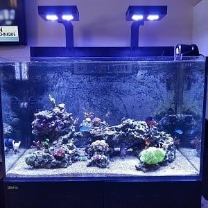 Reef71019