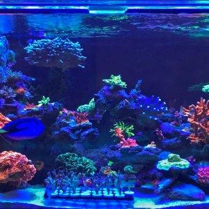 2020 1-7-20 Aquarium front view.jpg
