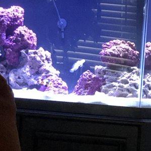 New Reef Setup