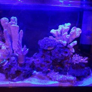 Moonlight on Nano reef #1