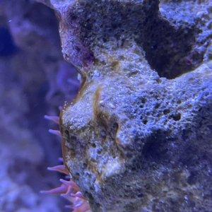 algae3.jpg