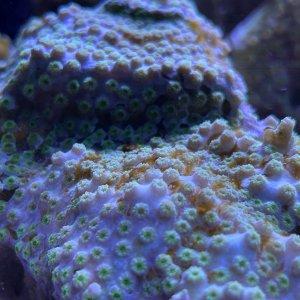 algae4.jpg