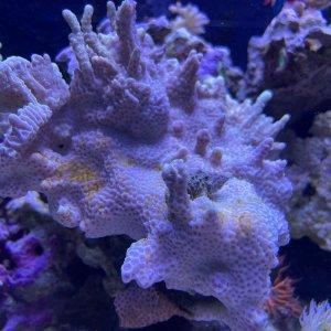 algae7.jpg